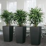 Растения для интерьера